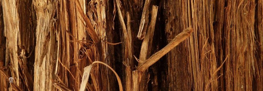 چوبی آروماتیک