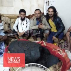عنبر 127 کیلوگرمی ، پایان فقر ماهیگیران یمنی! (فیلم)
